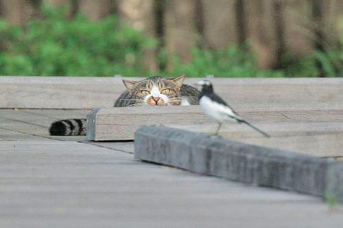 Кошка - хищник